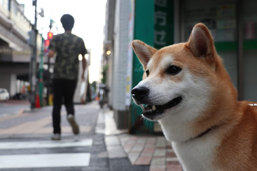 dog-friendly-travel-japan